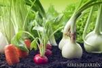 El mes de Octubre y tu mesa de cultivo urbano